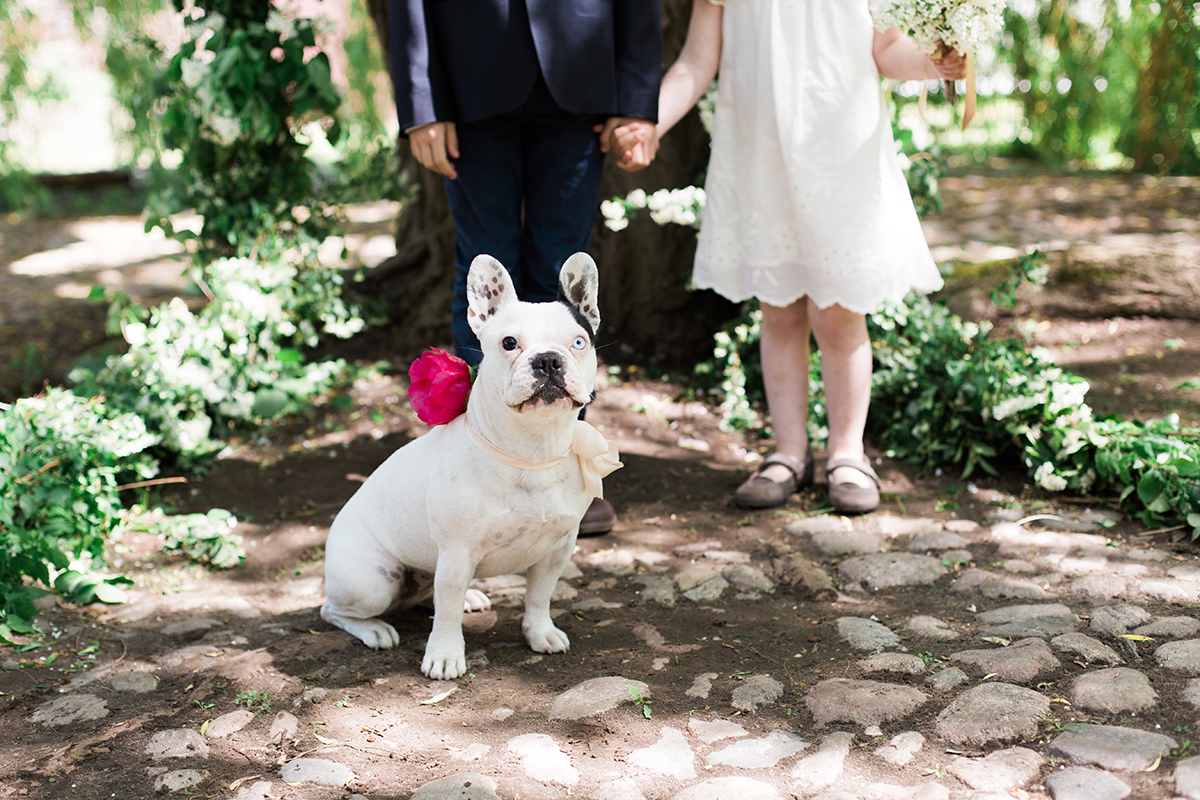 French Bulldog Wedding Photo