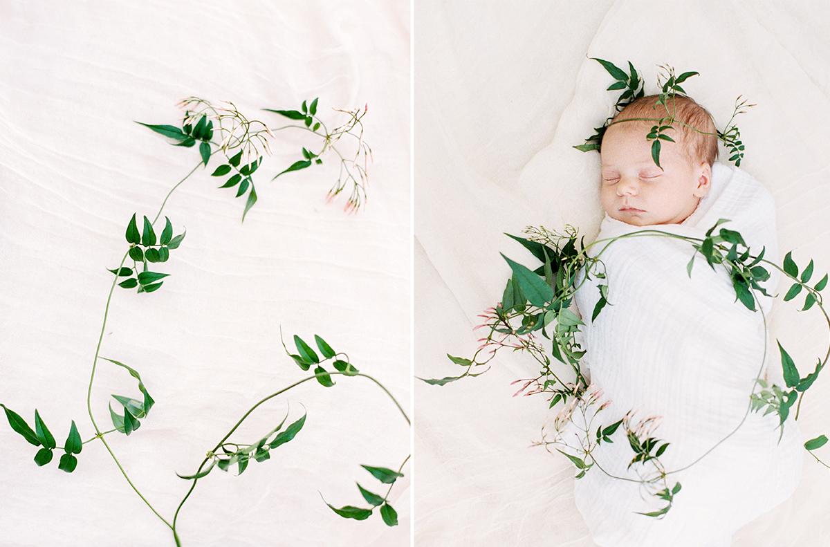Flowering Jasmine Newborn Photos