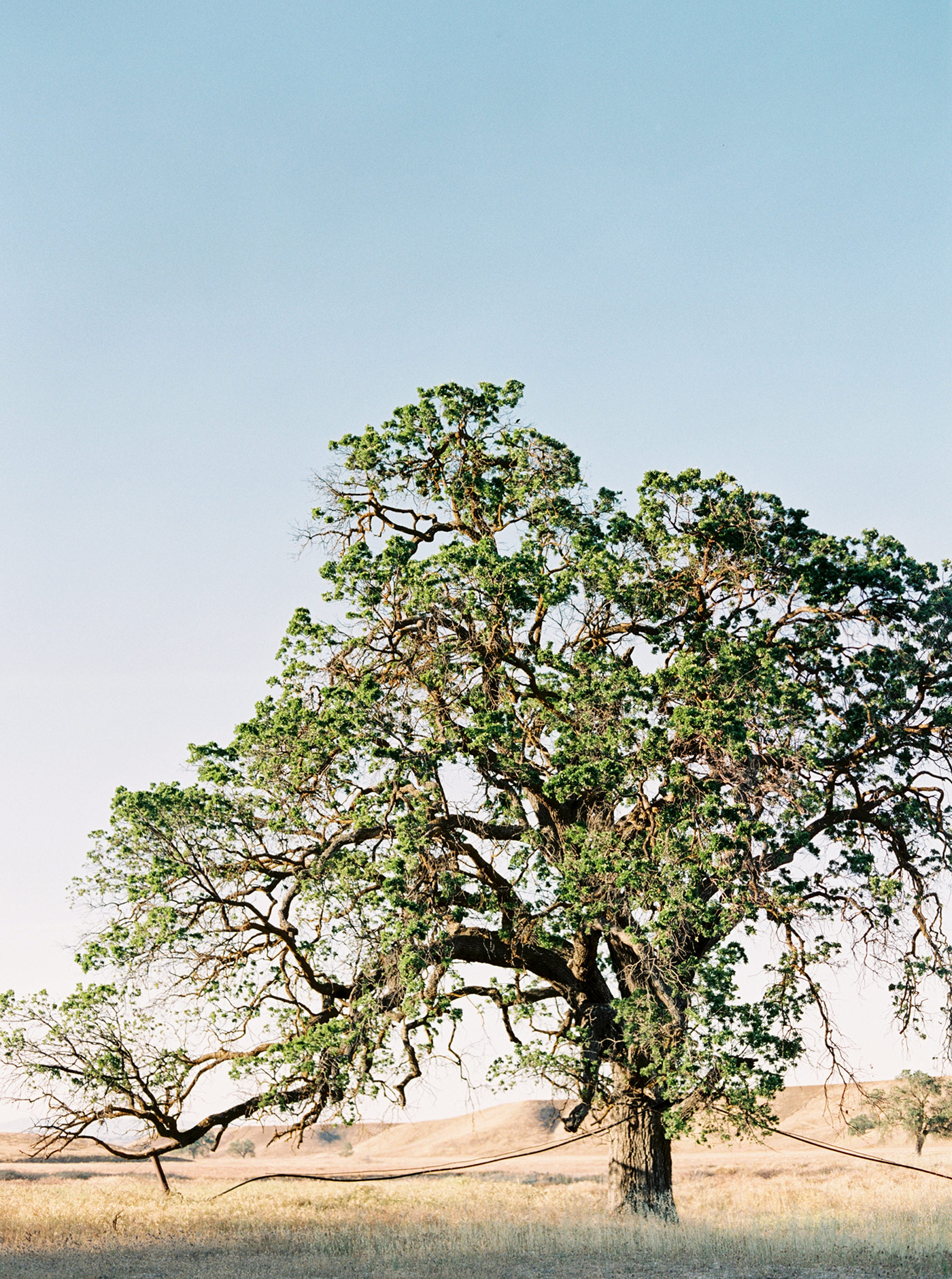 Fine Art Film Wedding Photographer Santa Ynez