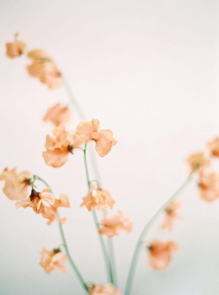 Peach Japanese Sweet Pea Flowers